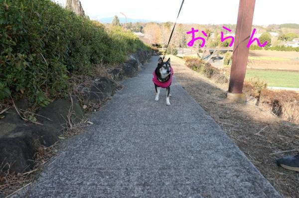 東俣野中央公園(横浜市戸塚区)_f0369014_12172579.jpg