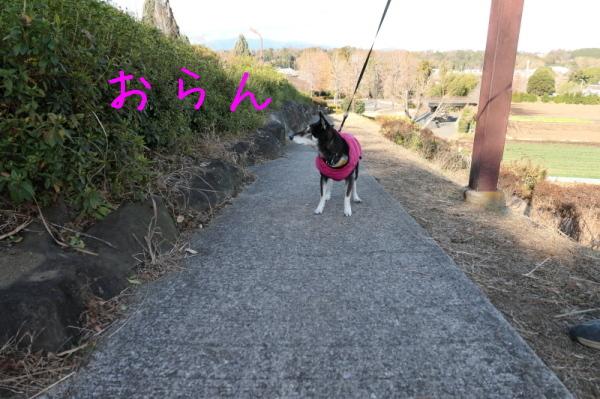 東俣野中央公園(横浜市戸塚区)_f0369014_12182173.jpg