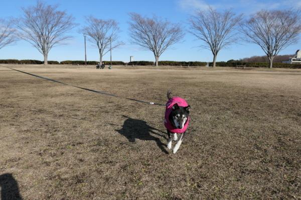 東俣野中央公園(横浜市戸塚区)_f0369014_12423830.jpg