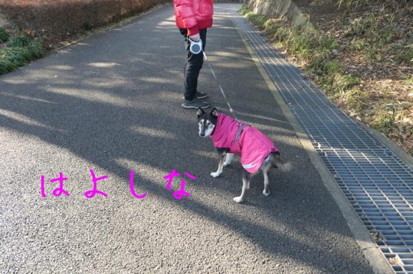 東俣野中央公園(横浜市戸塚区)_f0369014_13490676.jpg