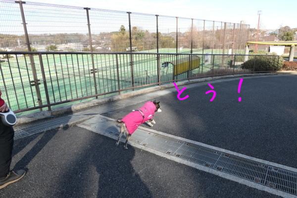 東俣野中央公園(横浜市戸塚区)_f0369014_13534255.jpg