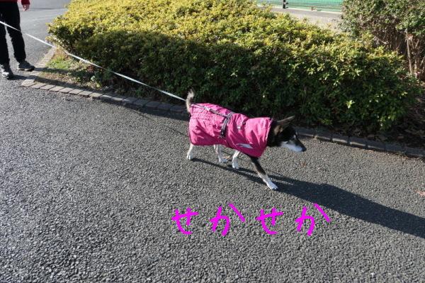 東俣野中央公園(横浜市戸塚区)_f0369014_14004539.jpg