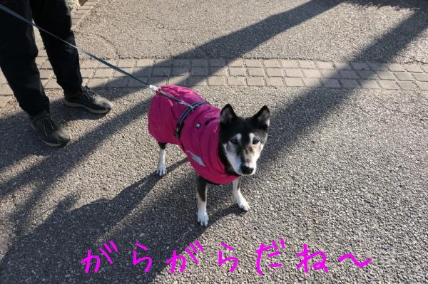 東俣野中央公園(横浜市戸塚区)_f0369014_17510491.jpg