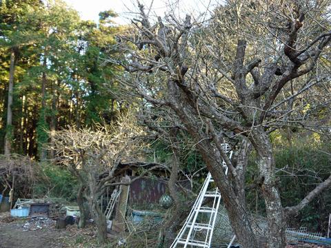 六国見山の森は27日、畑は28日に2017年の仕事納め_c0014967_103167.jpg