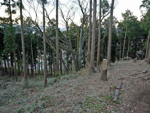六国見山の森は27日、畑は28日に2017年の仕事納め_c0014967_1035828.jpg