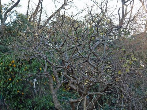 六国見山の森は27日、畑は28日に2017年の仕事納め_c0014967_1091777.jpg