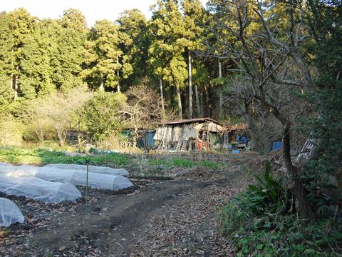 六国見山の森は27日、畑は28日に2017年の仕事納め_c0014967_109482.jpg