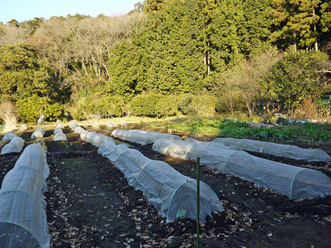 六国見山の森は27日、畑は28日に2017年の仕事納め_c0014967_1095952.jpg