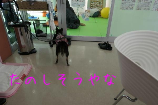 リハビリ納め_f0369014_13031669.jpg