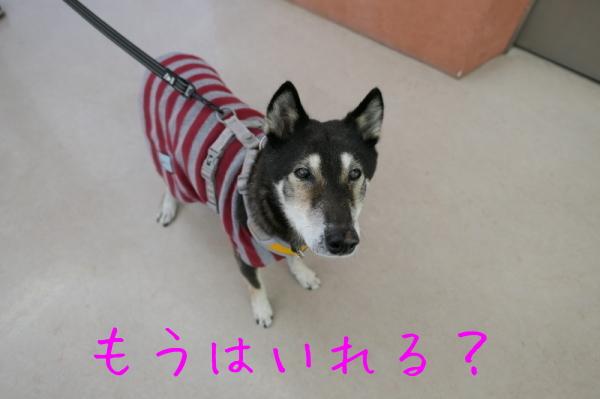 リハビリ納め_f0369014_13034527.jpg