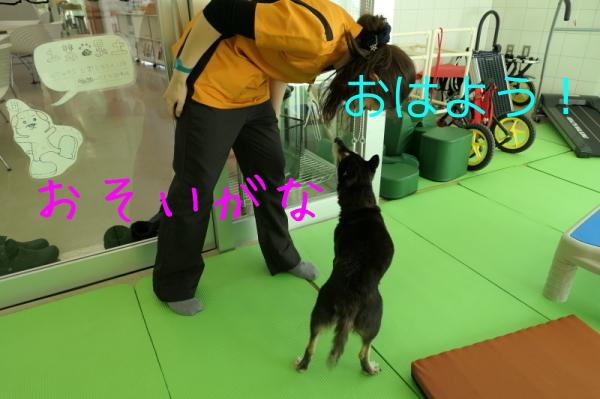 リハビリ納め_f0369014_13145641.jpg