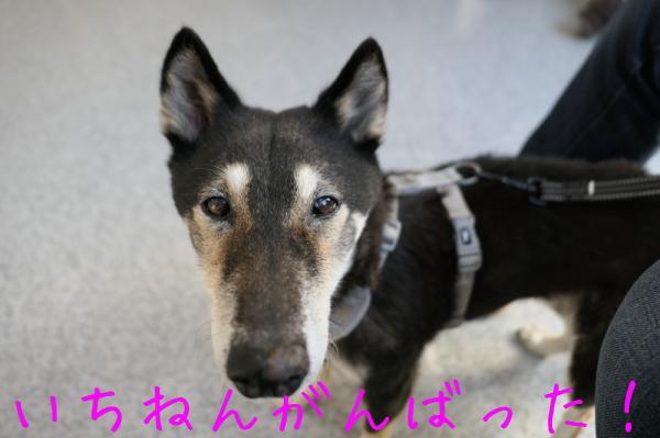 リハビリ納め_f0369014_13240422.jpg