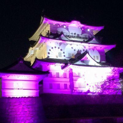 小田原城がライトアップしているよ_e0234016_18000236.jpg