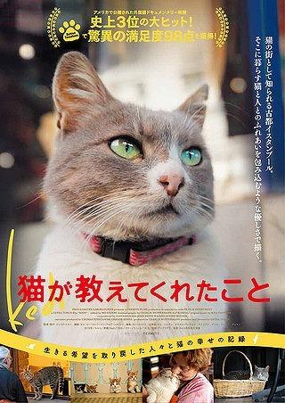 猫が教えてくれたこと_d0171835_18422878.jpg