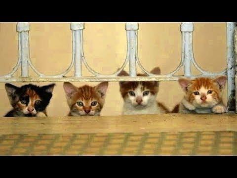 猫が教えてくれたこと_d0171835_18435429.jpg