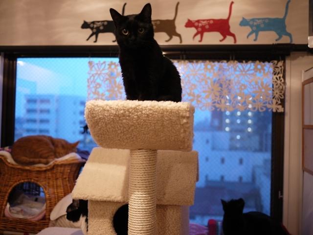 お誕生日猫 ろった永遠の2歳猫。_a0143140_22375200.jpg