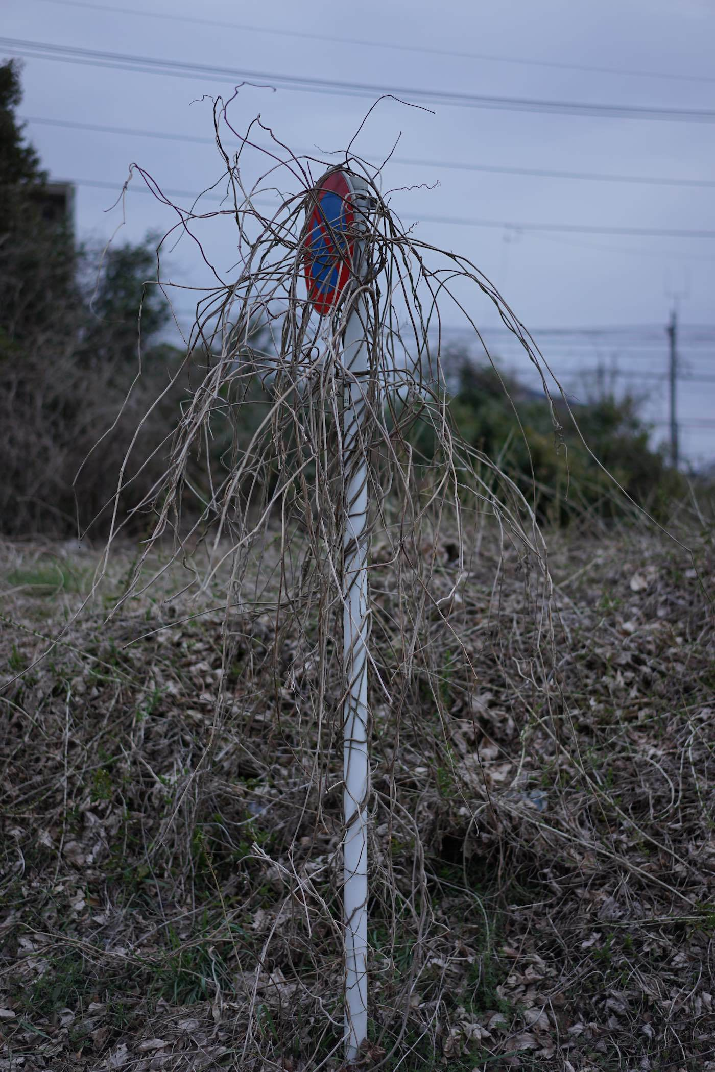聖蹟桜ケ丘スナップ その61_b0360240_23163049.jpg