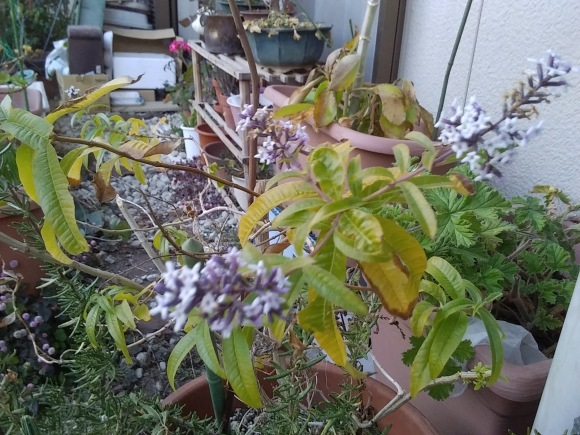 冬の花_d0116059_16215454.jpg
