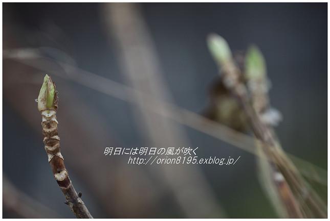 f0361079_20371561.jpg