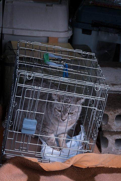 氷雨の日の引越猫たち_d0353489_19274250.jpg