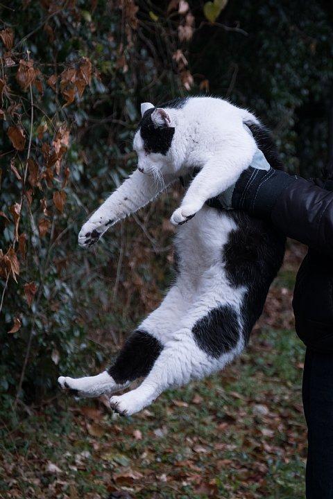 氷雨の日の引越猫たち_d0353489_19284495.jpg