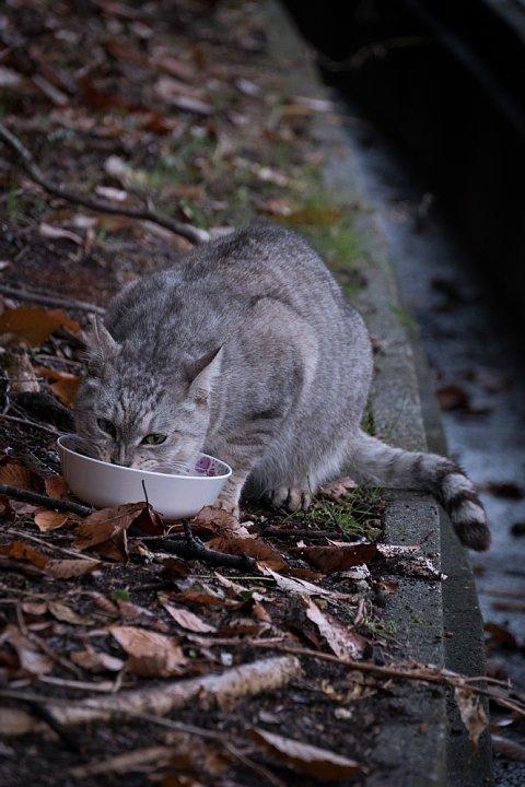 氷雨の日の引越猫たち_d0353489_1932334.jpg