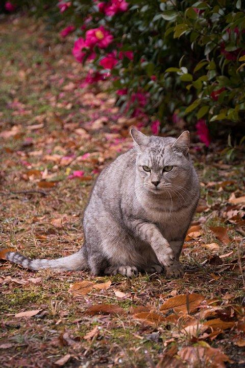 氷雨の日の引越猫たち_d0353489_19421615.jpg