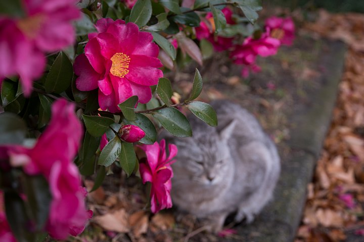 氷雨の日の引越猫たち_d0353489_1942351.jpg