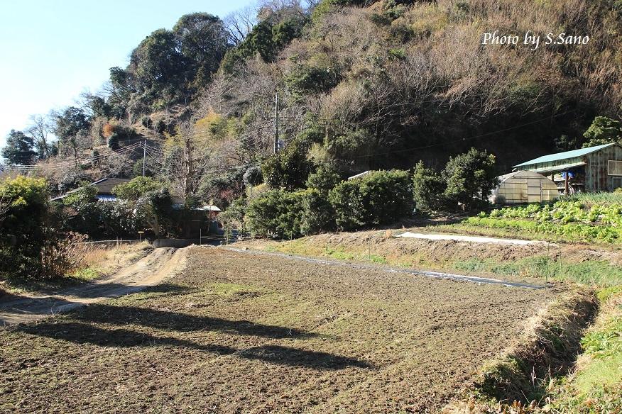 三浦半島の里山(2017年12月)_b0348205_21331484.jpg