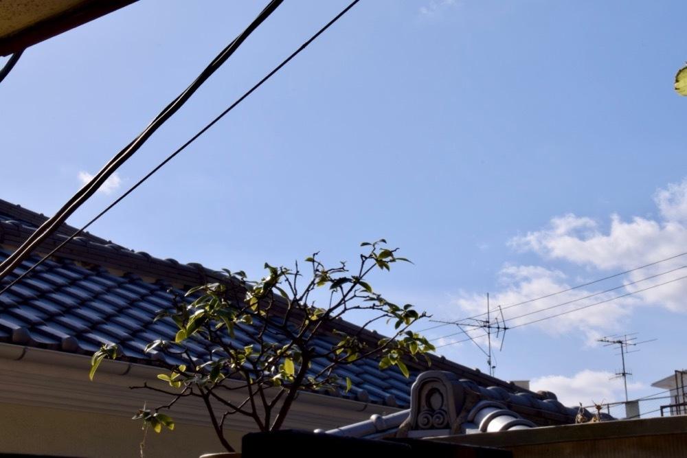 大晦日の前日に神戸ぶらり旅という酔狂(おまけ)_c0030705_21423446.jpg