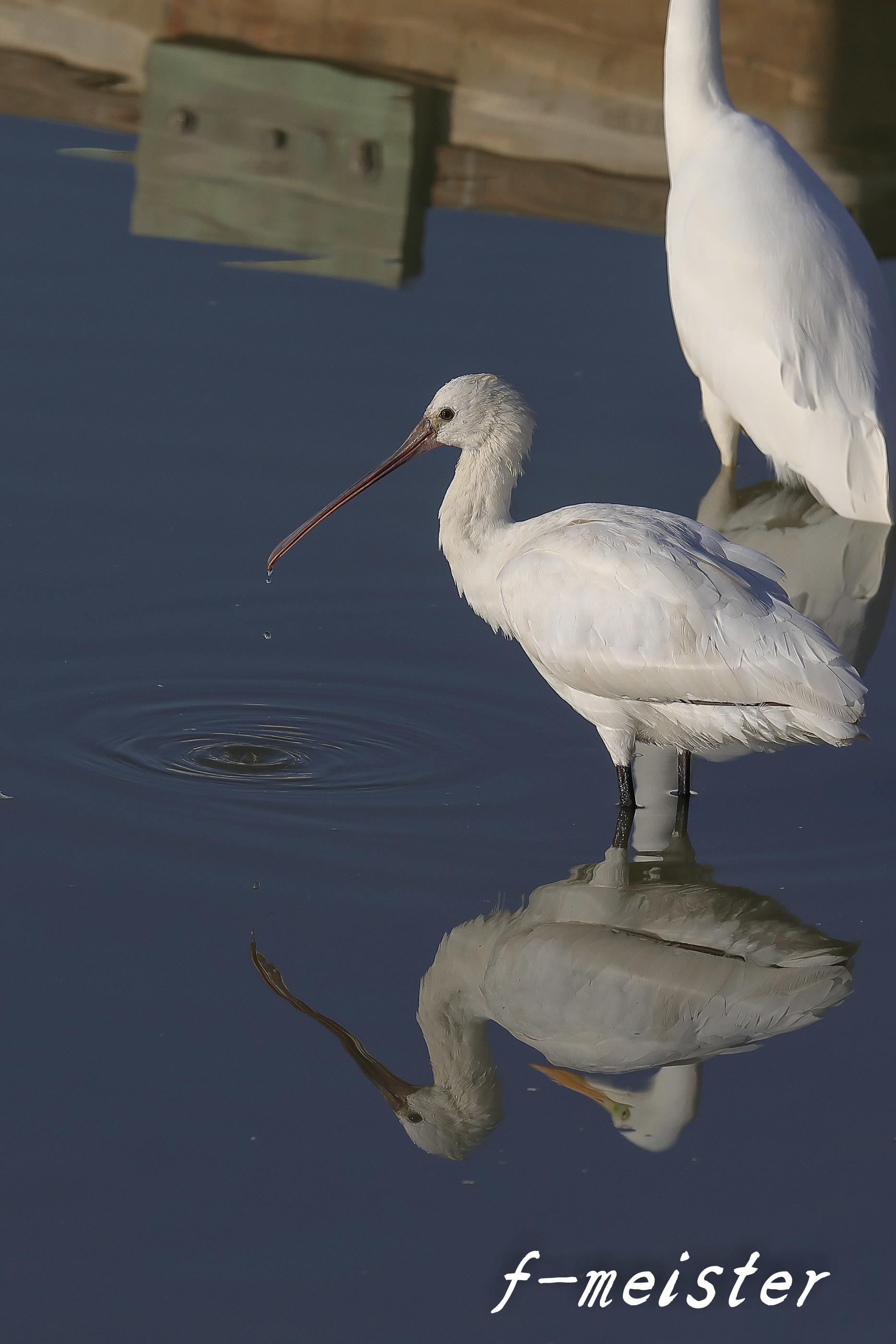 12月の鳥見…… _d0359405_21322670.jpg