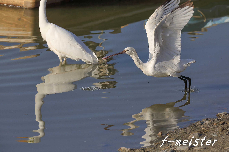 12月の鳥見…… _d0359405_21323700.jpg