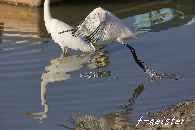 12月の鳥見…… _d0359405_21324735.jpg