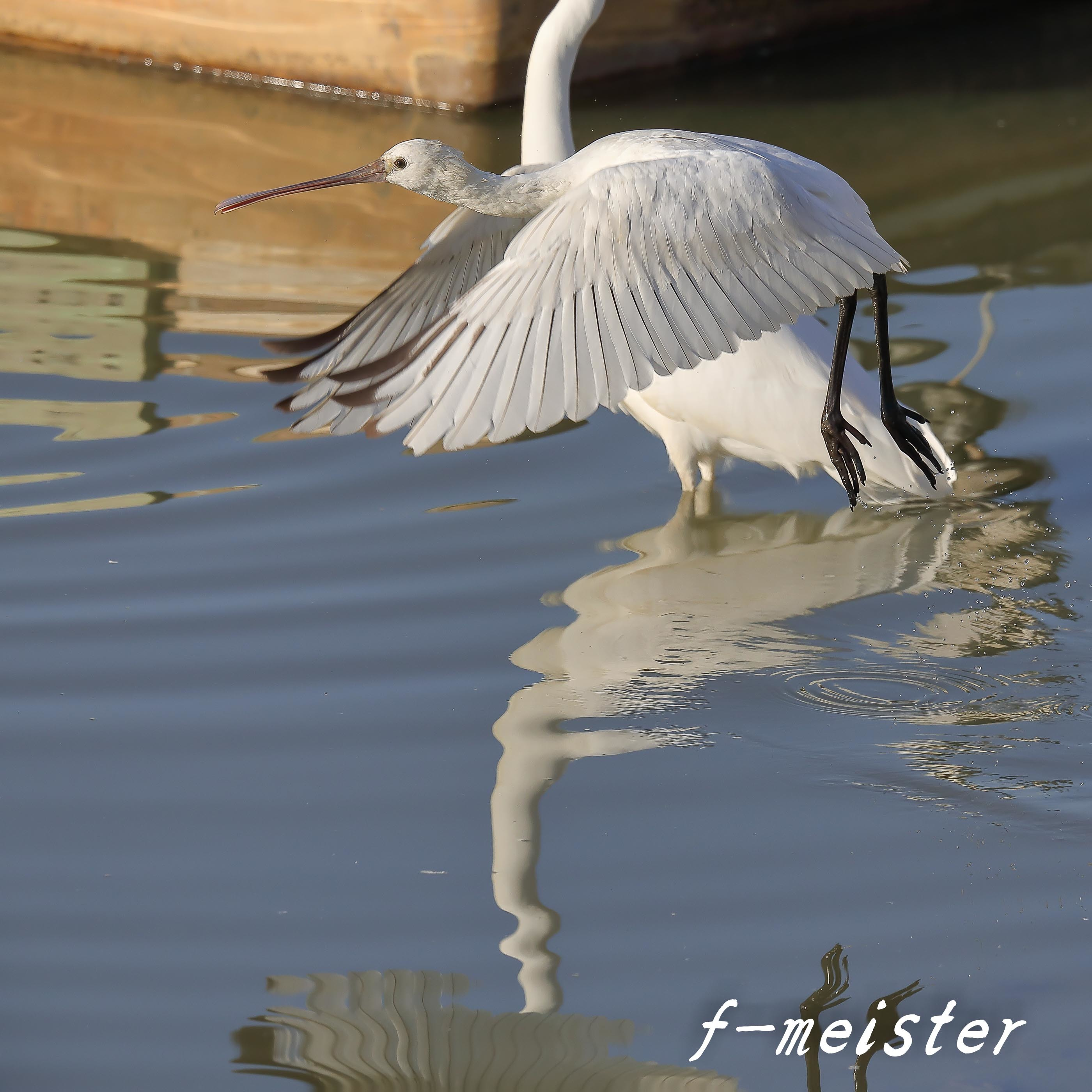 12月の鳥見…… _d0359405_21325456.jpg