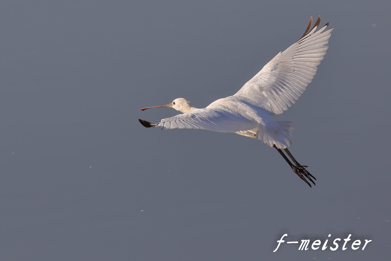 12月の鳥見…… _d0359405_21330357.jpg