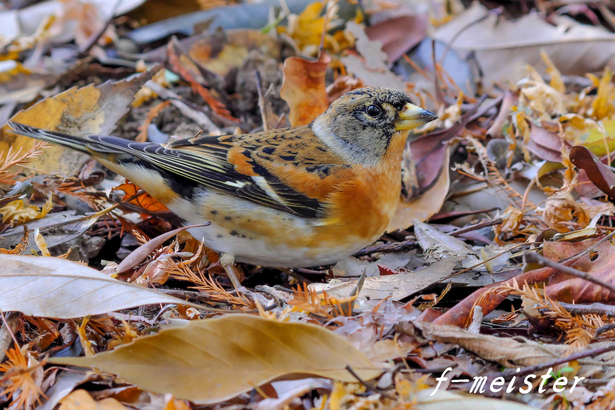 12月の鳥見…… _d0359405_21333217.jpg