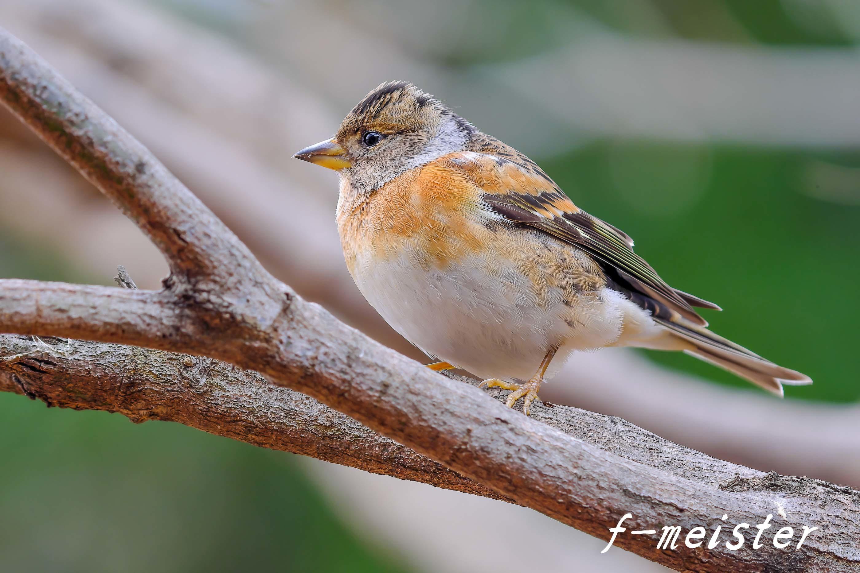 12月の鳥見…… _d0359405_21334275.jpg