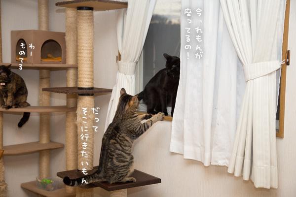 小窓をめぐる攻防 _d0355333_19590981.jpg
