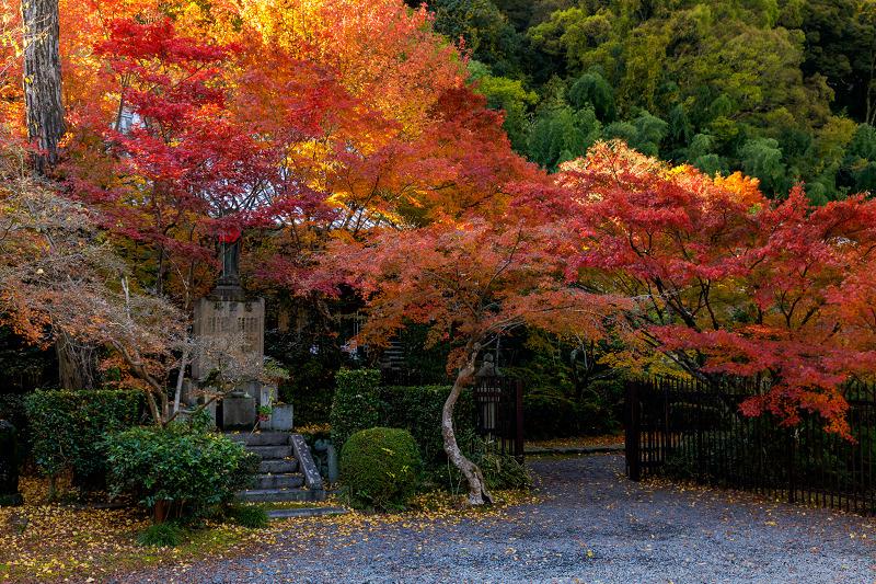 京都の紅葉2017 善法律寺の秋_f0155048_23552763.jpg