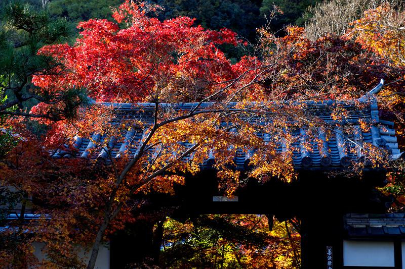 京都の紅葉2017 善法律寺の秋_f0155048_23554668.jpg