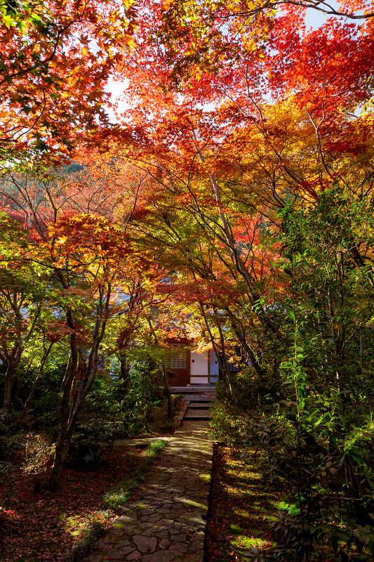京都の紅葉2017 善法律寺の秋_f0155048_23555659.jpg