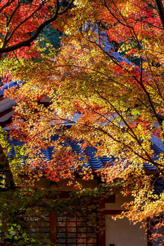京都の紅葉2017 善法律寺の秋_f0155048_235617.jpg