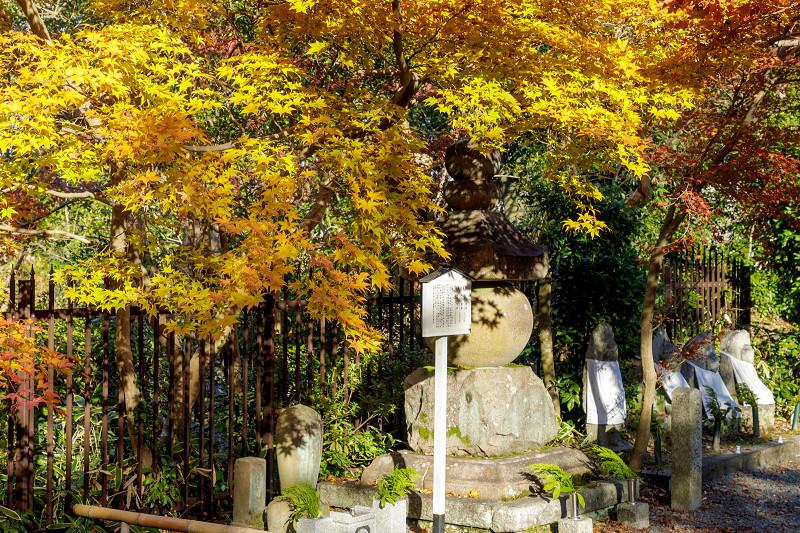 京都の紅葉2017 善法律寺の秋_f0155048_23561968.jpg