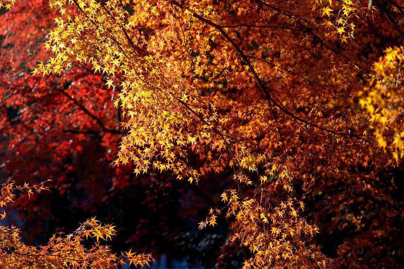 京都の紅葉2017 善法律寺の秋_f0155048_23563487.jpg
