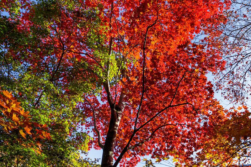 京都の紅葉2017 善法律寺の秋_f0155048_2356593.jpg
