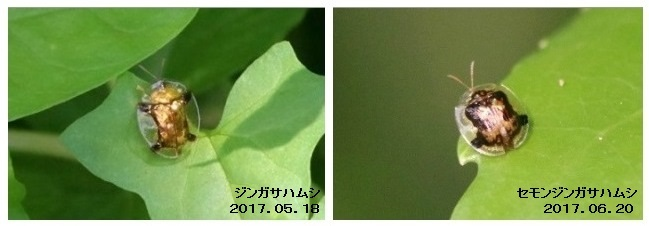 b0363649_00351687.jpg