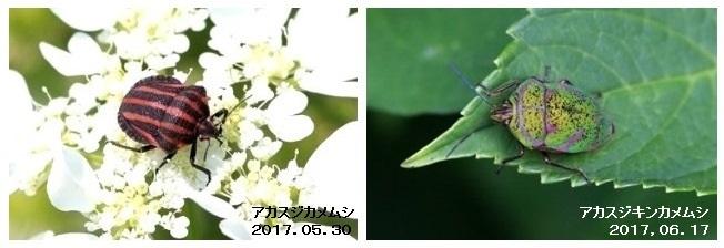 b0363649_00353883.jpg
