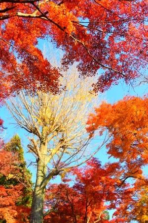 京都パンパン赤線時代 五十七_f0347663_14195873.jpg