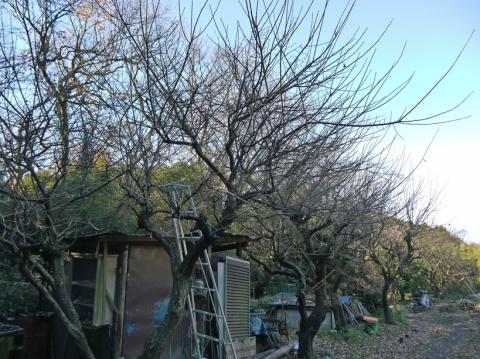 六国見山の森は27日、畑は28日に2017年の仕事納め_c0014967_08552911.jpg