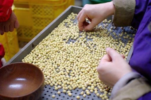 味噌用大豆の脱穀・選別_c0110869_13054179.jpg